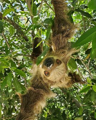 slothfriend.jpg