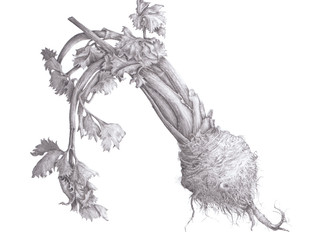 Celeriac, the unsungfrog prince of winter vegetables.