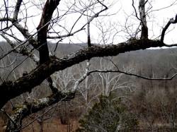 Current River - Cave Sp Trail 1