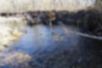 Blue Springs Creek, Missouri