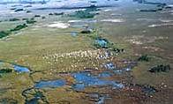Everglades Florida Fishing