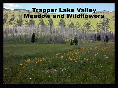 Trapper's Lake wildflowers