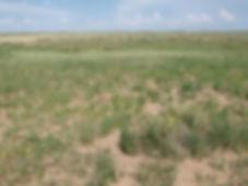 Cimmaron Hills - Kansas Hunting