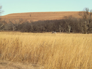 Hike in the Tallgrass
