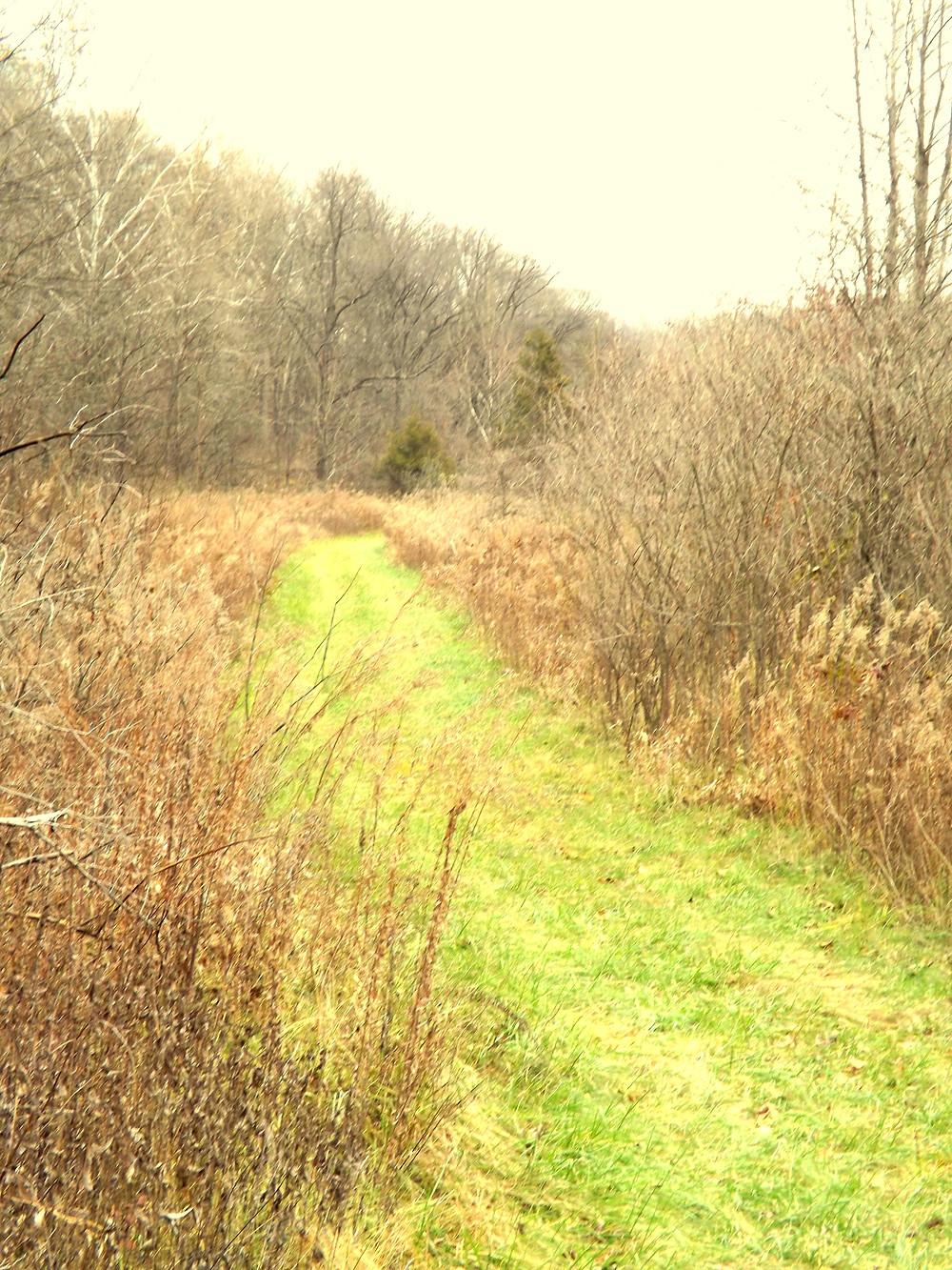 Little Lost Creek Valley fields