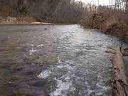 Little Piney Creek | Missouri | Wild Trout Fishing