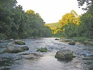 Fly fishing the Eleven Point River in Missouri