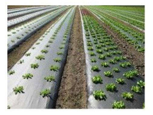 Paillage à salade | Largeur 1m40 vendu par 10 mêtres