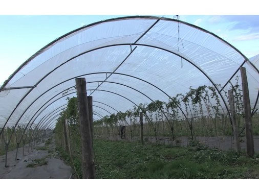 Tunnels Fruits rouges | Largeur 5m