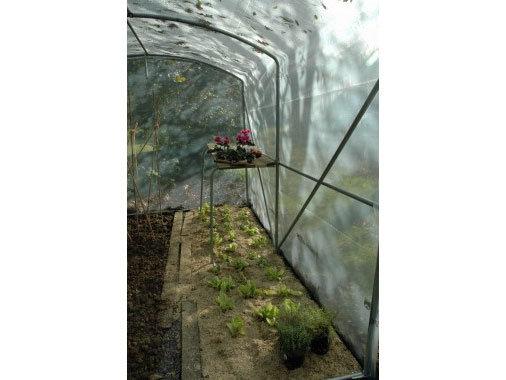 Serre petit jardin Larg x 3m  bâche  enterrée. acier renforcé 30mmx2mm
