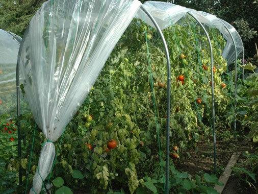 Abri temporaire à tomates larg x 1m50 acier renforcé 30mmx2mm