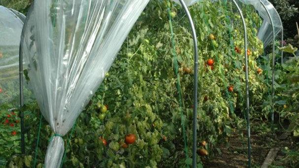 Abri temporaire à tomates - largeur 1,50m - ø 30
