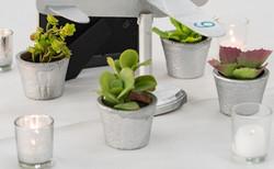 Faux Potted Succulents