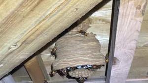 ハチの巣の駆除 はじめました