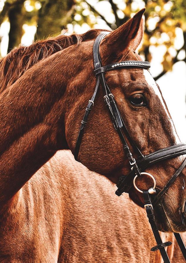 balade_à_cheval_à_la_maison_sollier.jpg