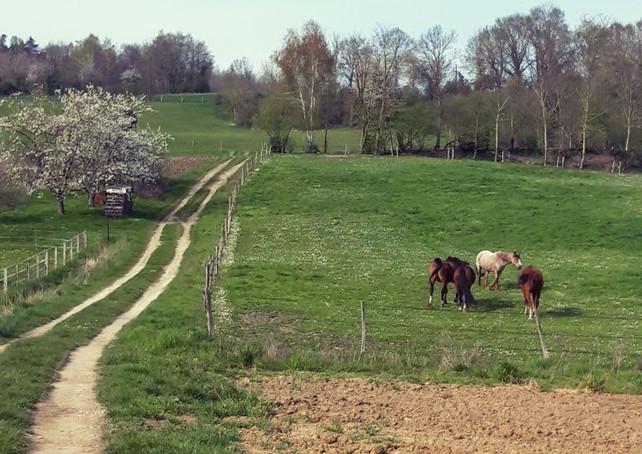 Les chevaux à Sollier