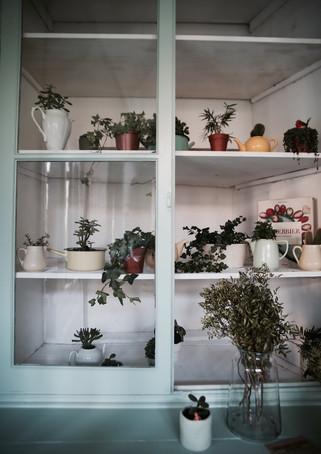 La belle entrée botanique de la maison sollier