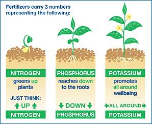 fertilizer infographic.png