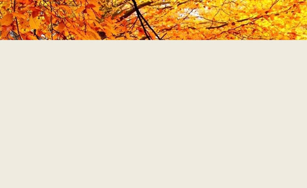 Fond automne.JPG