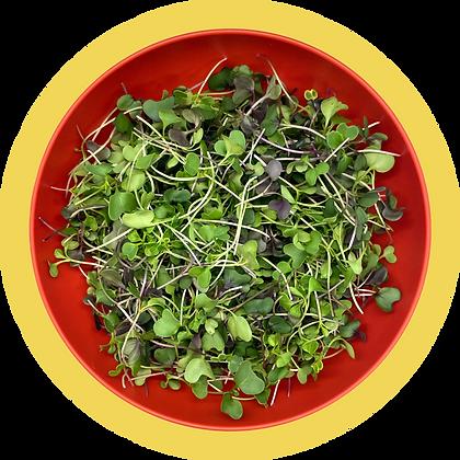 Mellow Mama Mini Greens