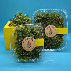 Mellow Microgreens