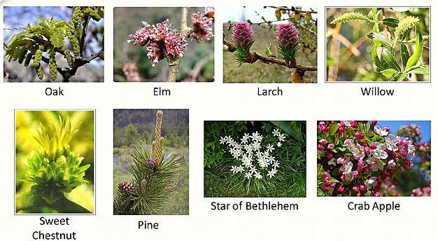 imagem de algumas flores de onde vem os florais de Bach
