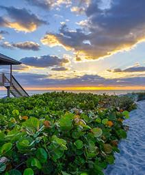 florida-delray-beach-sea-grapes-safe-gua