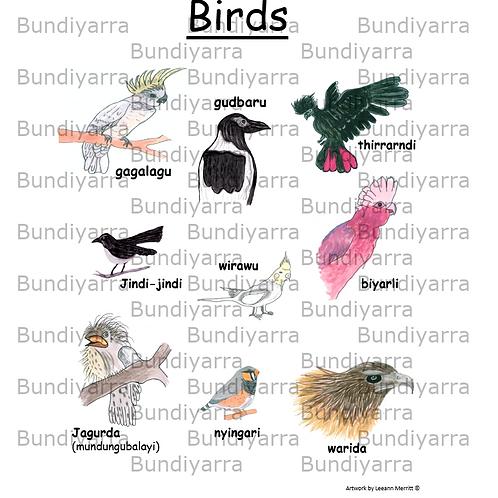 Wajarri Birds