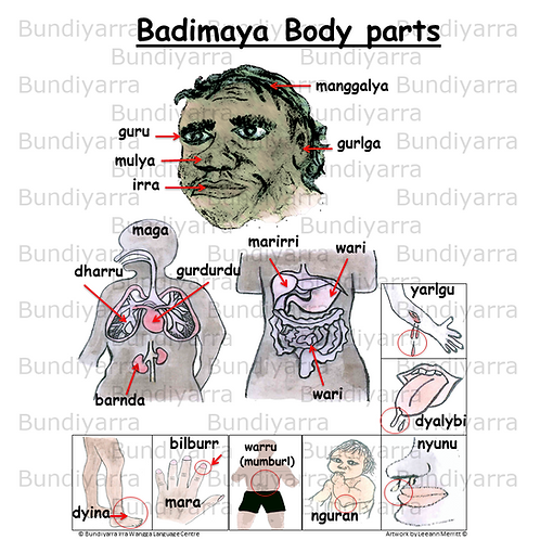 Badimaya Body Parts (topical poster)