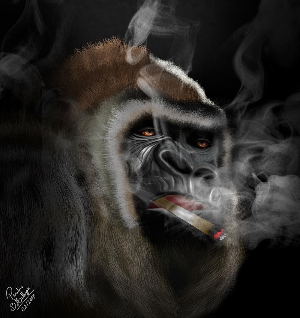 Gorilla Smoking