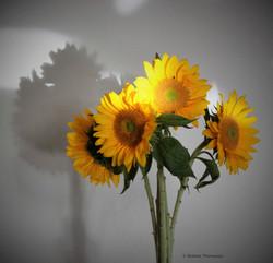 LR Sunflower