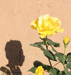 LR shadow flower