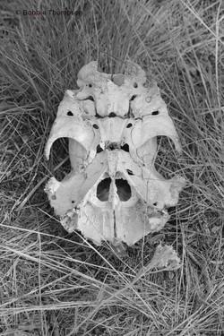 LR Upside down skull