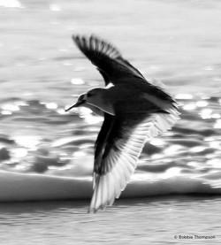 LR double bird