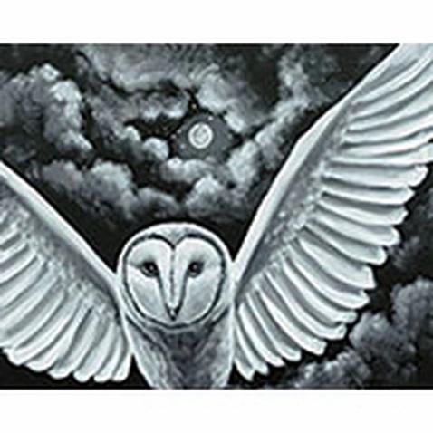 Night Owl.webp