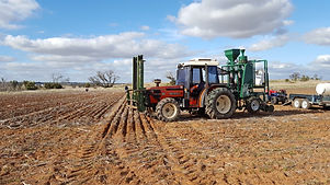 broadacre sowing2.jpg