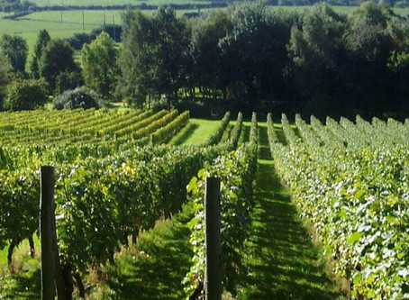 Will 2018 Be English Wines Breakthrough Harvest?