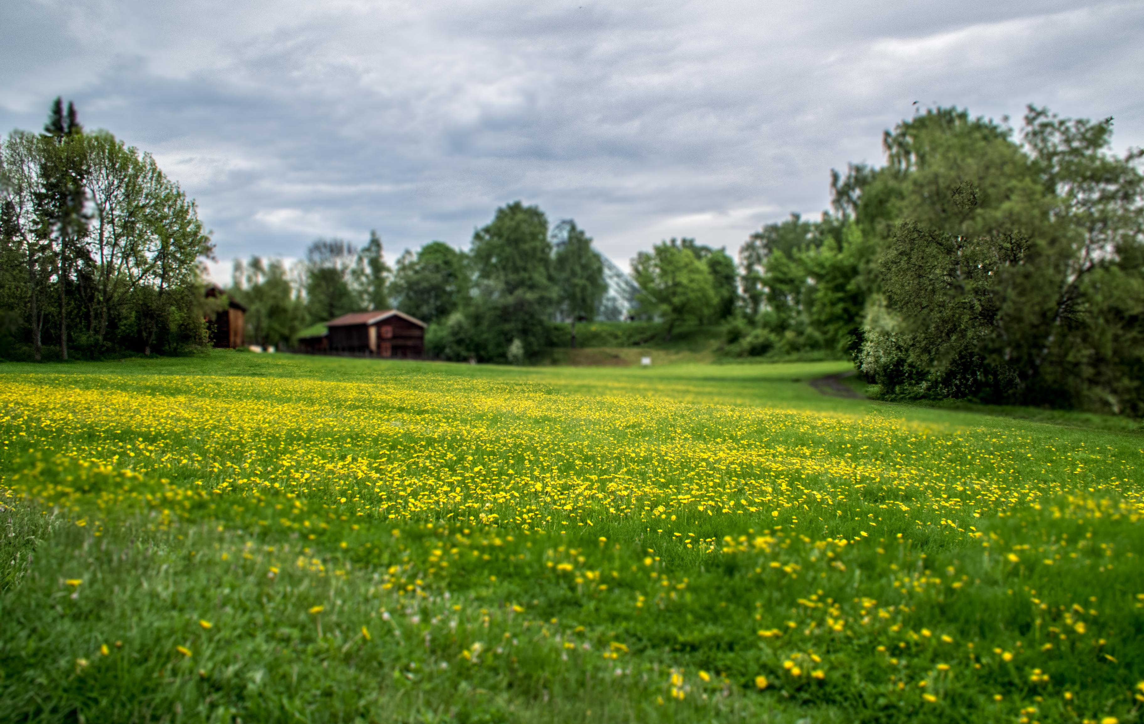 Norway 281