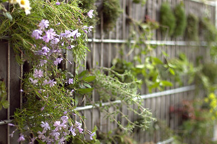 Gabione bepflanzt