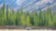 region-alaska-00.webp