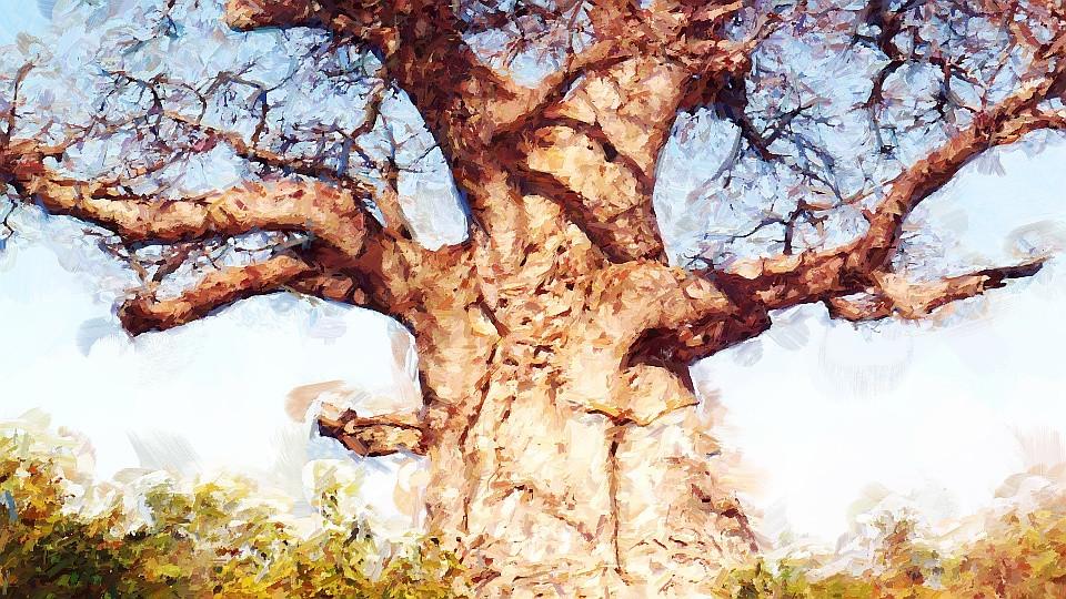 Baobá de ponta cabeça imbondeiro