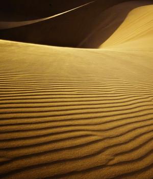 dune_edited.jpg