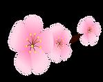 sakura.png