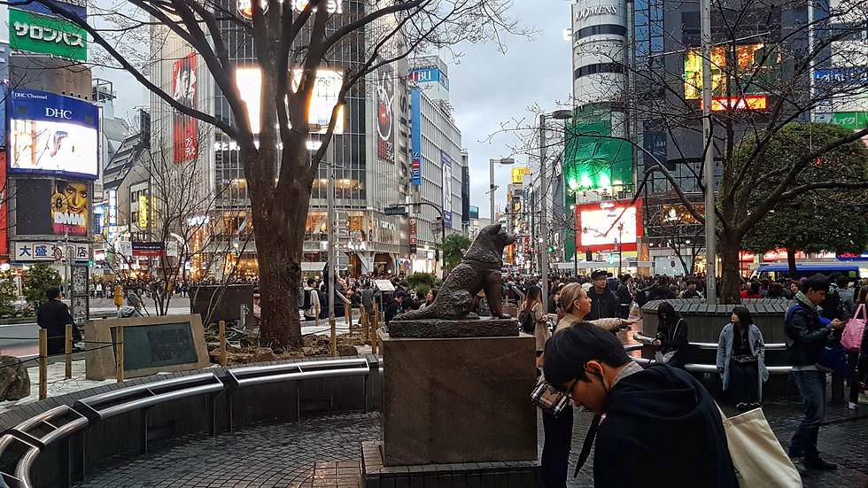 cruce shibuya, shibuya cross, tokio, tokyo, hachiko