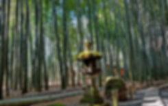 hohohu-ji, bambu, bamboo, templo, temple,kamakura, japon, japan