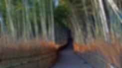 bosque de bambu, bamboo grove, arashiyama, kyoto japon