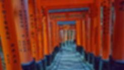 fushimi inari taisha, kioto, kyoto, templo, temple, toris