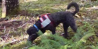 K9-Behavior | Truffle Training | Truffle Dog | Train Your Dog to Hunt Truffles | Truffle Hunting Dog | Dig | Train Your Dog to Sniff for Truffles