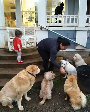 K9-Behavior Company | Private Dog Training | In-Home Dog Training | One-on-One Dog Training