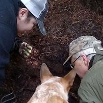 K9-Behavior | Truffle Training | Truffle Dog | Train Your Dog to Hunt Truffles | Truffle Hunting Dog | Train Your Dog | Foraging Dog Training